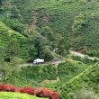 Tea plantation, Cameron Highlands, Malaysia - Stock Photo