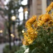 Stock Photo: Flowers in Boston Neighborhood
