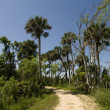 Nature Trail in Florida — Stock Photo