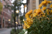 Flowers in Boston Neighborhood — Stock Photo