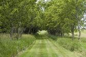Trail in iowa — Stockfoto