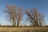 Stromy v ohiu — Stock fotografie