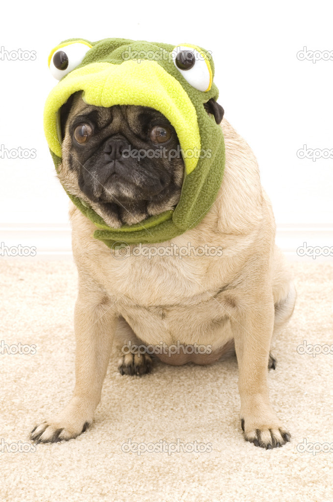 Pug Dressed up Pug Dressed up as a Turtle