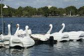 Barcos de cisnes en el lago eola park — Foto de Stock