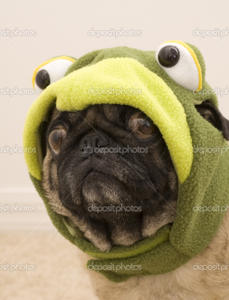 Pug Dress Pug Dressed up For Halloween