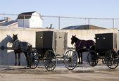At ve ohio arabaları — Stok fotoğraf