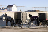 Horse and Buggies in Ohio — Stock Photo