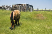 Horse on Ranch in Wyoming. — Stock Photo