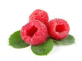 Three raspberries — Stock Photo