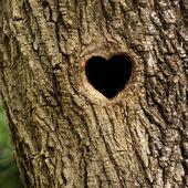 Het nest van de vogel in de holle trunk — Stockfoto