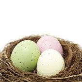 Huevos de pascua en el nido de pájaro real — Foto de Stock
