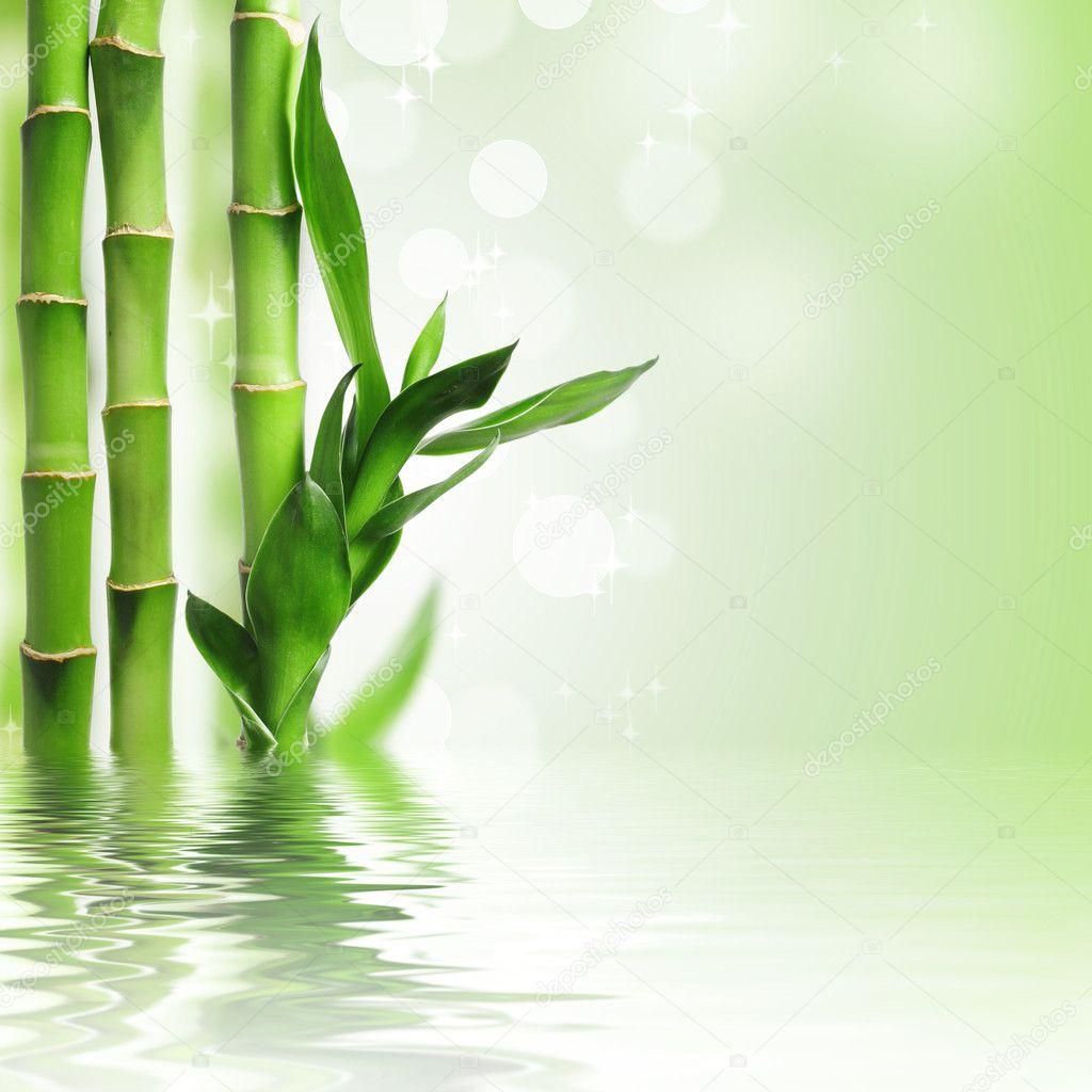 gr n bambus hintergrund stockfoto 7104742. Black Bedroom Furniture Sets. Home Design Ideas