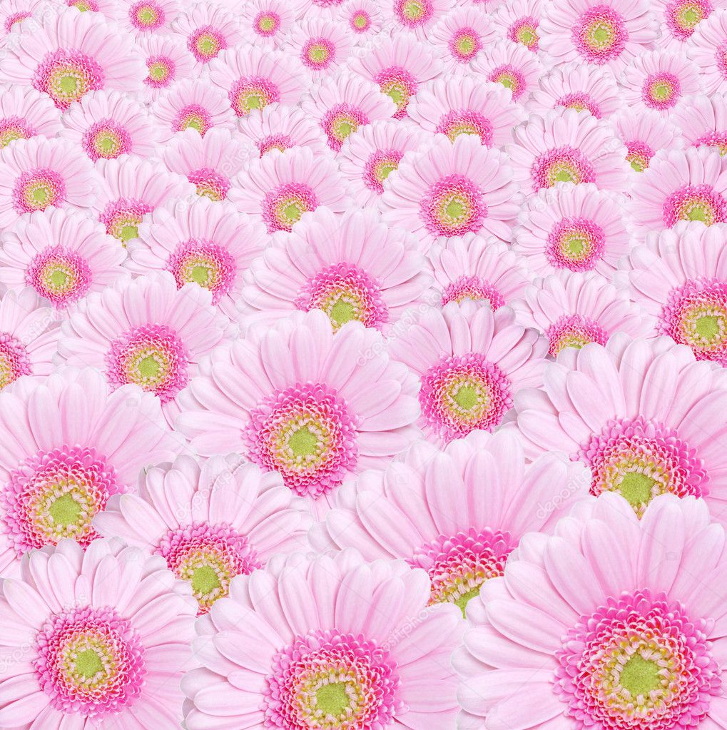 Background image od pink gerbera flowers  Stockfoto #7109020