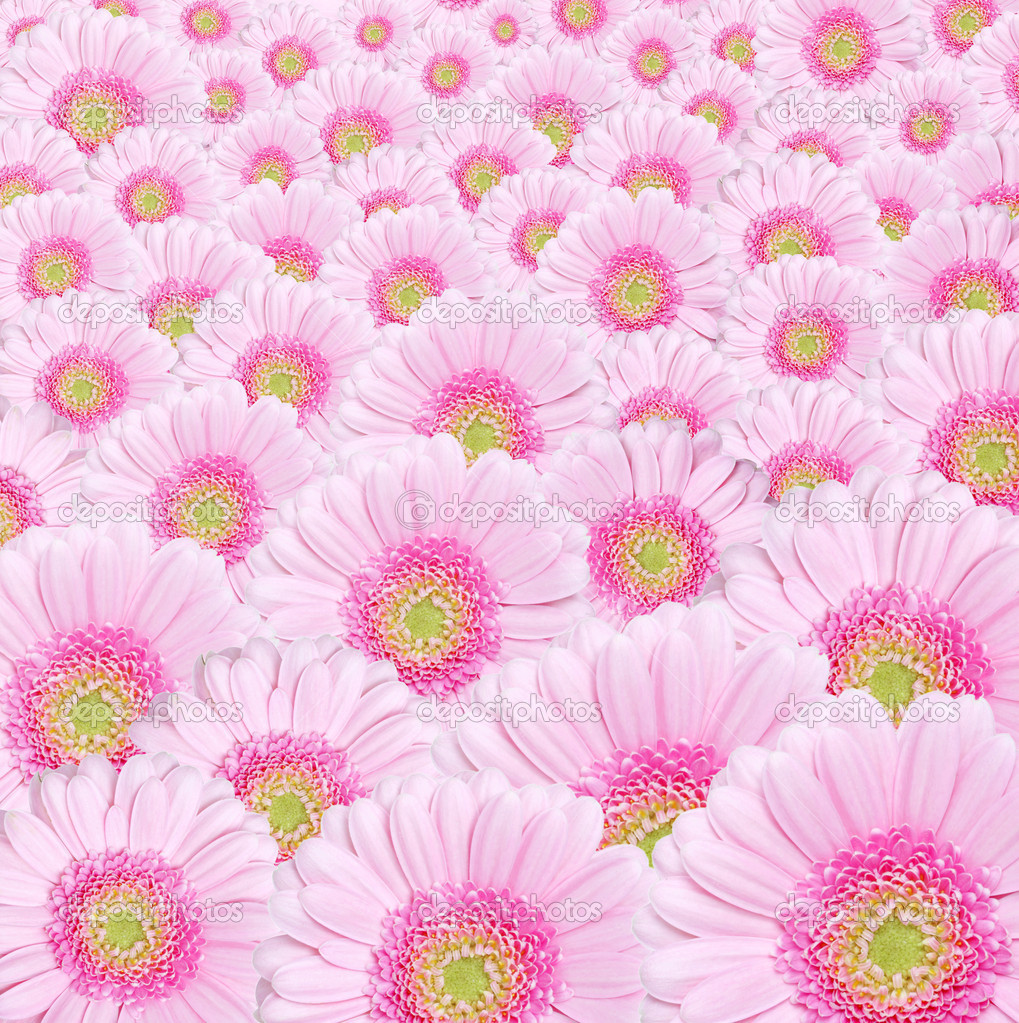 Background image od pink gerbera flowers — Foto de Stock   #7109020