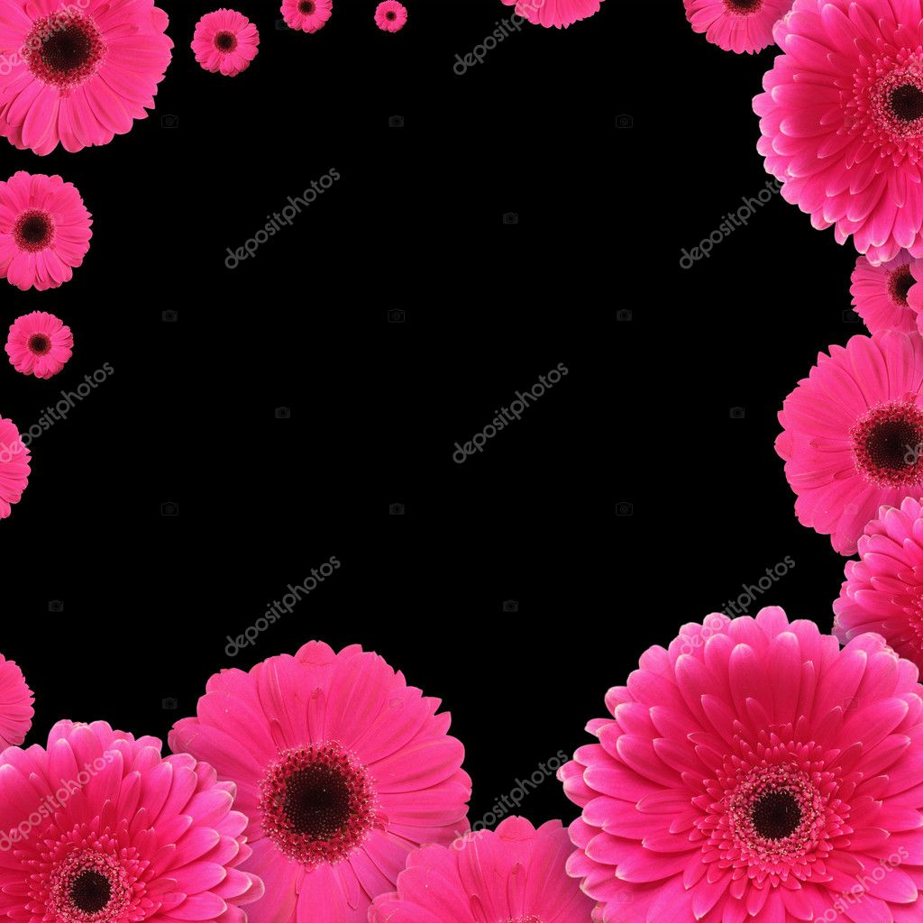 Pink gerbera flowers over black background — Stock Photo #7109079