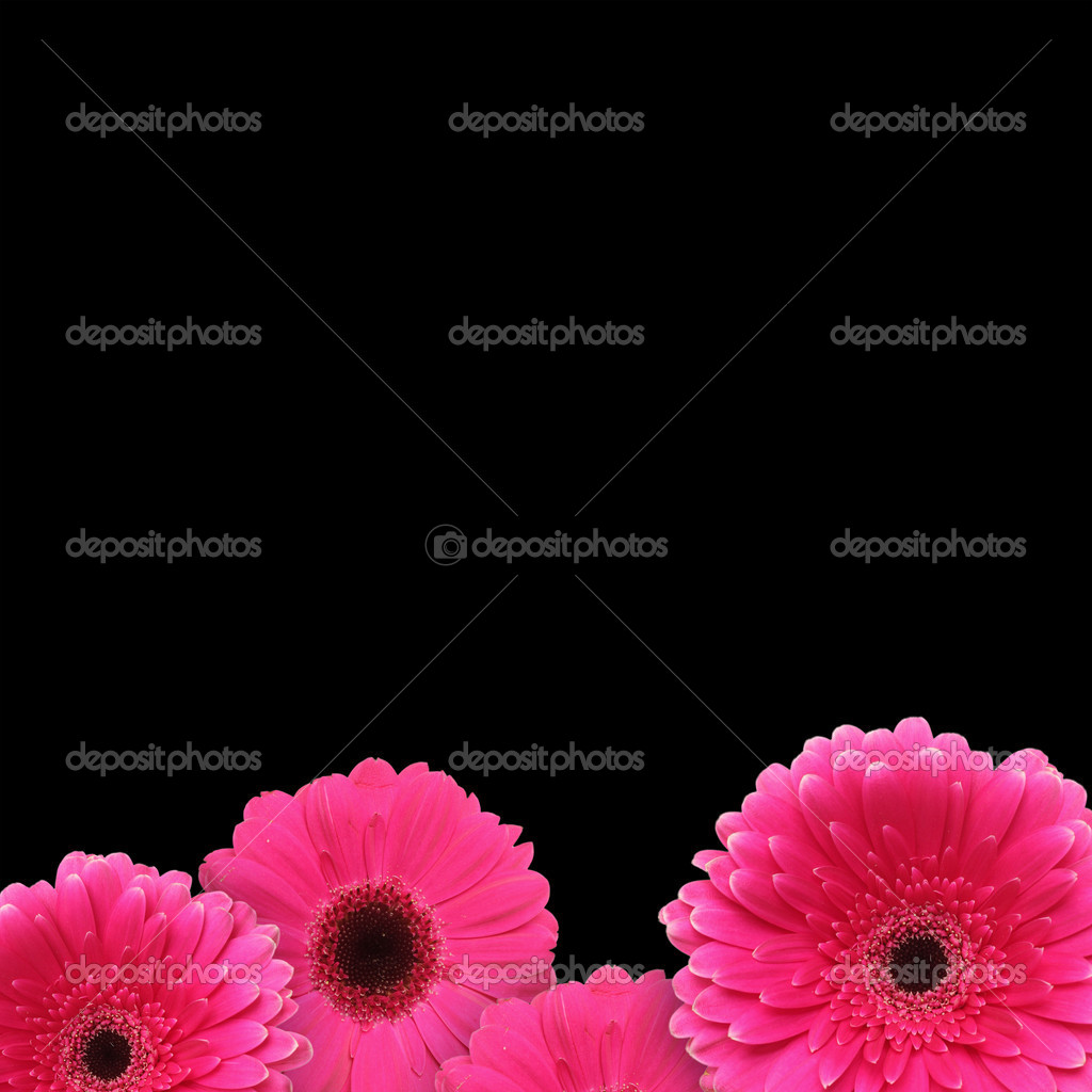 Pink gerbera flowers over black background  Stock Photo #7109082