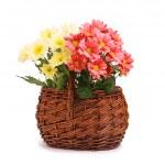 Gerbera flores na cesta de vime — Foto Stock