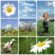 Spring collage — Stock Photo #7116507