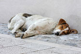 Abandoned dog on the street — Stock Photo