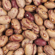 Cranberry beans — Stock Photo