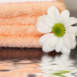 Clean towels and daisy — Stock Photo