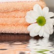 Stock Photo: Clean towels and daisy