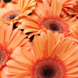 Orange Gerbera Flowers — Stock Photo