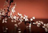 Rama flor hermosa — Foto de Stock