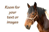 Domestic horse — Stock Photo