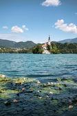 Ilha bled na eslovênia — Foto Stock