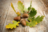 Oak acorns — Stock Photo
