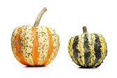 Two pumpkins — Stockfoto