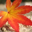 Maple leaf — Foto Stock #7519793
