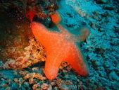 Immersioni maldiverna — Stockfoto