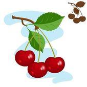 Three cherries. — Stock Vector