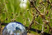 Mantis Ball — Stock Photo