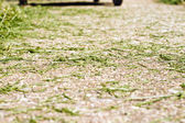 Mow Sidewalk Clippings — Stock Photo