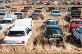 Junk Yard Cars — Stock Photo