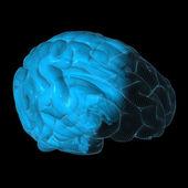 Wireframe brain — Stock Photo