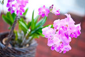 Beautiful bunch of purple pink mini orchid — Stock Photo