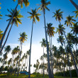 Stock Photo: Tropical island in the sun