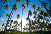 Tropical island in the sun — Stock Photo