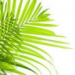 Stock Photo: Palm leaves swaying in the breeze on white background