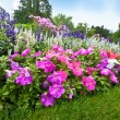 Stock Photo: Pretty manicured flower garden with colorful azaleas