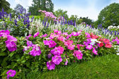 Pretty manicured flower garden with colorful azaleas — Stock Photo