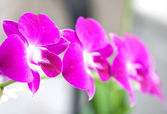 Lovely magenta orchid on a stem — Stock Photo
