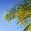 Palm leaves against blue sky — Stock Photo #7254897
