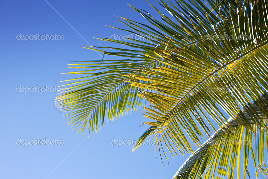 Palm leaves against blue sky as background — Stock Photo #7254897