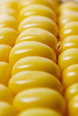 Close up of corn — Stock Photo