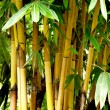 Asian Bamboo forest — Stock Photo #7506318